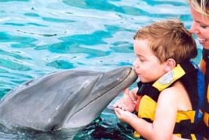 dolphin-swimming-isla mujeres