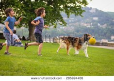 stock-photo-two-little-boys-playing-with-a-collie-dog-with-the-ball-in-the-park-285994406